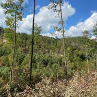 Forest Management Image #3